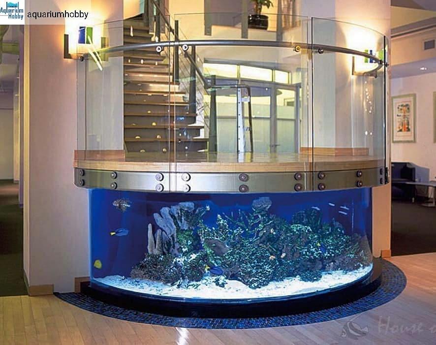 aquarium staircase