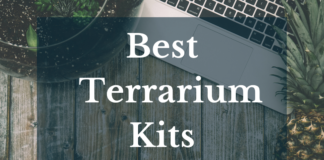 Best Terrarium Kits